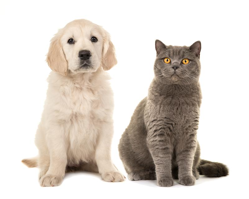 Portrait Of Dog And Cat Sitting Against White Background
