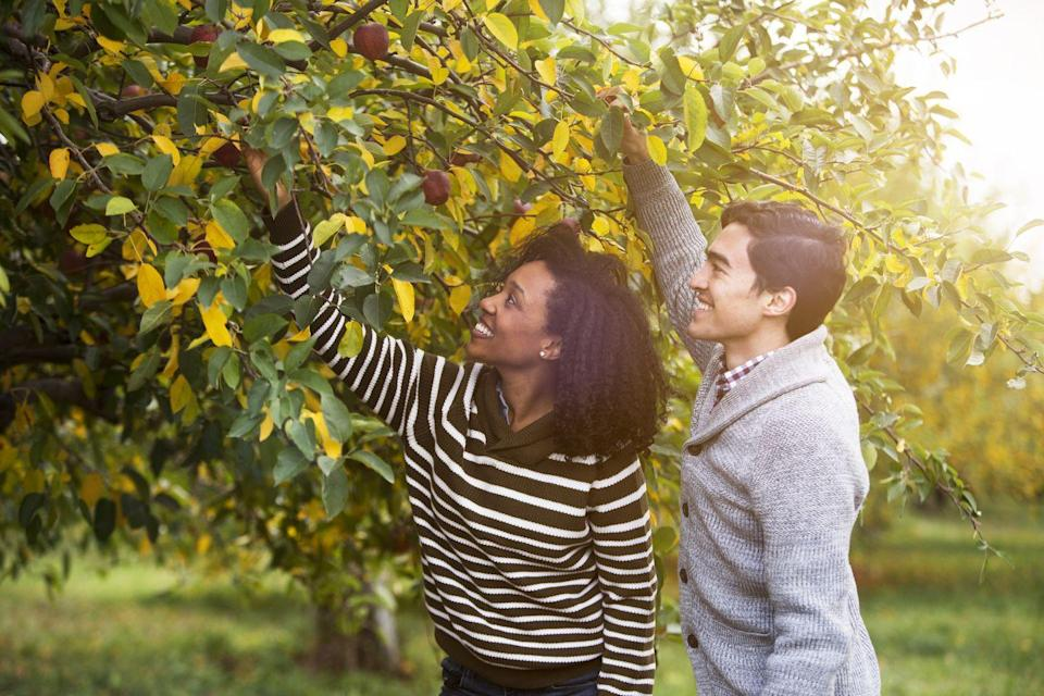 <p>If you live in the right climate, you can't beat apple picking for a fun active date. Not only do you end up with a delicious haul, you can learn more about the different varietals and each other as you chat your way through the rows of trees. </p>