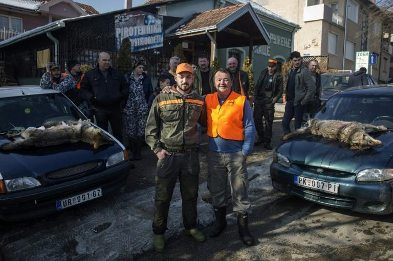 Wolf hunters Nikola Milincic (L) and Borica Vukicevic were successful during a recent hunt in Blace, a southern Serbian town, where the dead wolves and foxes are roped on to car bonnets