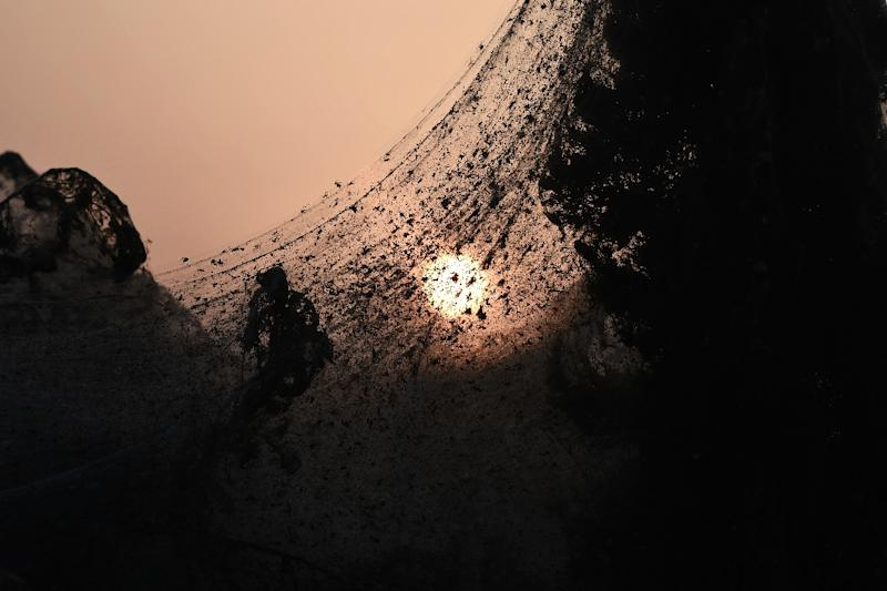 Warm weather has increased population of gnats and mosquitoes causing an overpopulation of spiders who feed off them (AFP Photo/Sakis MITROLIDIS)