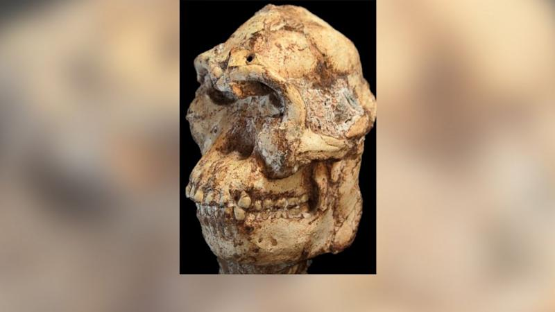 Meet Little Foot, the 3.67 Million-Year-Old Human Ancestor
