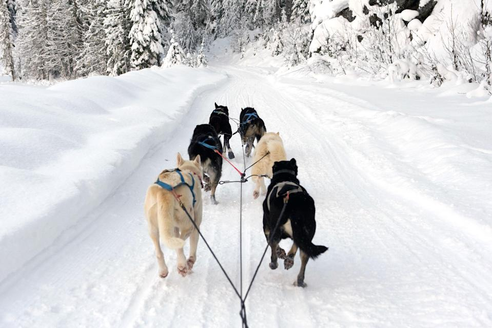 "<p><strong>Best thing to do in Vermont:</strong> Go dog sledding (with a clear conscience)</p> <p>There's no shortage of mushing activities throughout N<a href=""https://www.cntraveler.com/gallery/best-things-to-do-in-new-england-this-winter?mbid=synd_yahoo_rss"" rel=""nofollow noopener"" target=""_blank"" data-ylk=""slk:ew England during winter"" class=""link rapid-noclick-resp"">ew England during winter</a>, but at northern Vermont's Eden Ethical Dogsledding in Eden Mills, the welfare of the dogs is top priority. Meet and cuddle the ""Un-chained Gang""—a group of more than 35 sledding dogs—before they whisk you along an extensive, private trail network paved exclusively for sledding. Eden Mills is a scenic drive and a reasonable distance from all of northern Vermont's principal winter destinations, like Stowe, Jay Peak, Smuggler's Notch, and Burlington.</p>"