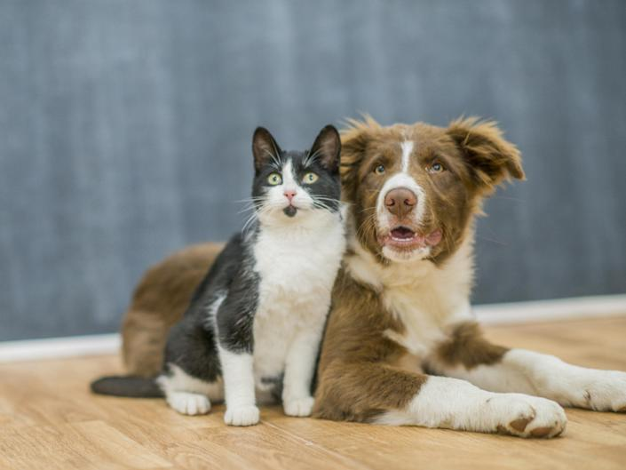 Cats and dogs may be susceptible to Covid-19, research suggests: Getty Images/iStockphoto