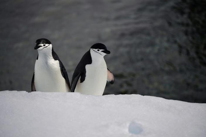 """""""Antarctic biodiversity helps us understand what life may be like elsewhere in the Universe,"""" said Monash University professor Steven Chown (AFP Photo/Johan ORDONEZ)"""
