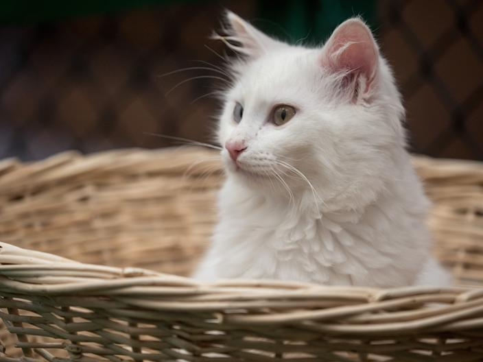 Cats are often safer when they spend most of their time indoors.