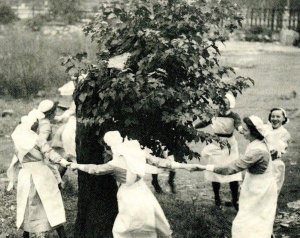 The Mulberry Tree was bombed to a stump during the Blitz but survivedRoya l London Hospital Archives