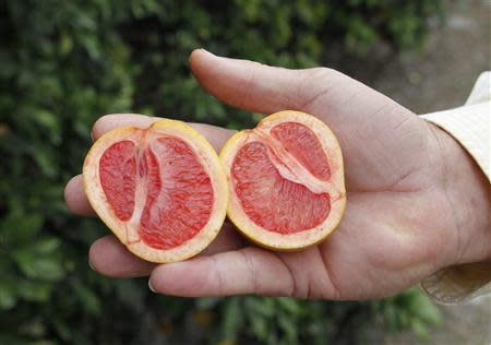 A grove manager holds a malformed star ruby grapefruit affected by 'greening', an insect-borne bacterial disease in a grove in Vero Beach, Florida in this December 1, 2010, file photo. REUTERS/Joe Skipper/File