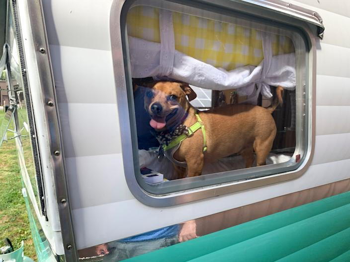 Dewey looks out the window of Chanice, a 2015 Shasta Airflyte Reissue camper.