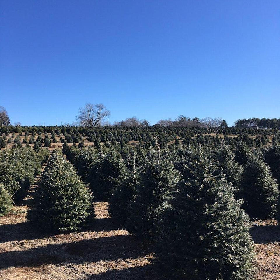 "<p><strong><a href=""https://www.yelp.com/biz/henrys-christmas-tree-farm-hope"" rel=""nofollow noopener"" target=""_blank"" data-ylk=""slk:Henry's Christmas Farm"" class=""link rapid-noclick-resp"">Henry's Christmas Farm</a> in Hope</strong></p><p>""Gorgeous space and welcoming staff - about everything you can ask for from a Christmas Tree Farm. My roommates tagged a tree this year, and when we went to pick it up, it was all freshly cut and trimmed for us. We were in and out in less than 15 minutes with our tree!"" - Yelp user <a href=""https://www.yelp.com/user_details?userid=1AaXf70Lx4F7iji1jl0FNA"" rel=""nofollow noopener"" target=""_blank"" data-ylk=""slk:Alexandra N."" class=""link rapid-noclick-resp"">Alexandra N.</a></p><p>Photo: Yelp/<a href=""https://www.yelp.com/user_details?userid=iVU2lvfap9W6ceUWIxKbgA"" rel=""nofollow noopener"" target=""_blank"" data-ylk=""slk:Brian M."" class=""link rapid-noclick-resp"">Brian M.</a></p>"