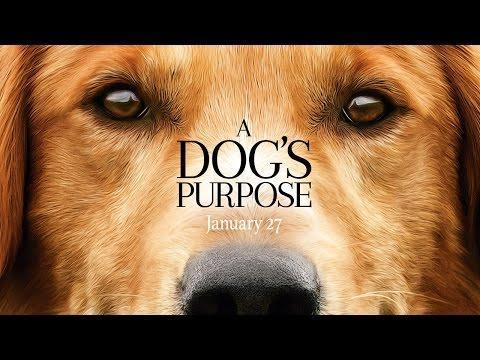 """<p>Like many people, this dog is just looking to find its purpose in life. So what if it takes several lifetimes and owners to do so?</p><p><a class=""""link rapid-noclick-resp"""" href=""""https://www.amazon.com/Dogs-Purpose-Britt-Robertson/dp/B06XFMBSV6?tag=syn-yahoo-20&ascsubtag=%5Bartid%7C2139.g.36827219%5Bsrc%7Cyahoo-us"""" rel=""""nofollow noopener"""" target=""""_blank"""" data-ylk=""""slk:Stream It Here"""">Stream It Here</a></p><p><a href=""""https://youtu.be/1jLOOCADTGs"""" rel=""""nofollow noopener"""" target=""""_blank"""" data-ylk=""""slk:See the original post on Youtube"""" class=""""link rapid-noclick-resp"""">See the original post on Youtube</a></p>"""