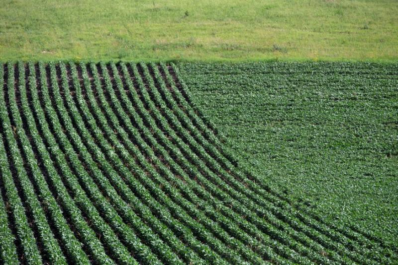 Soybeans grow in a field outside Wyanet, Illinois