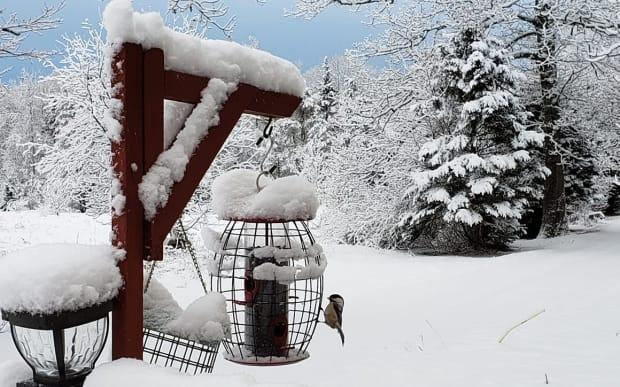 This chickadee has the feeder to himself after a heavy P.E.I. snowfall.