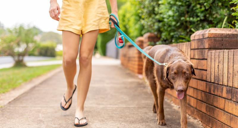 Coronavirus lockdown: Should I still be walking my dog?