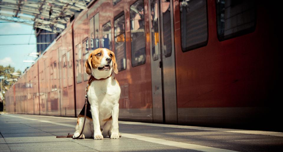 A dog sits on a train platform in front of a stopped train.