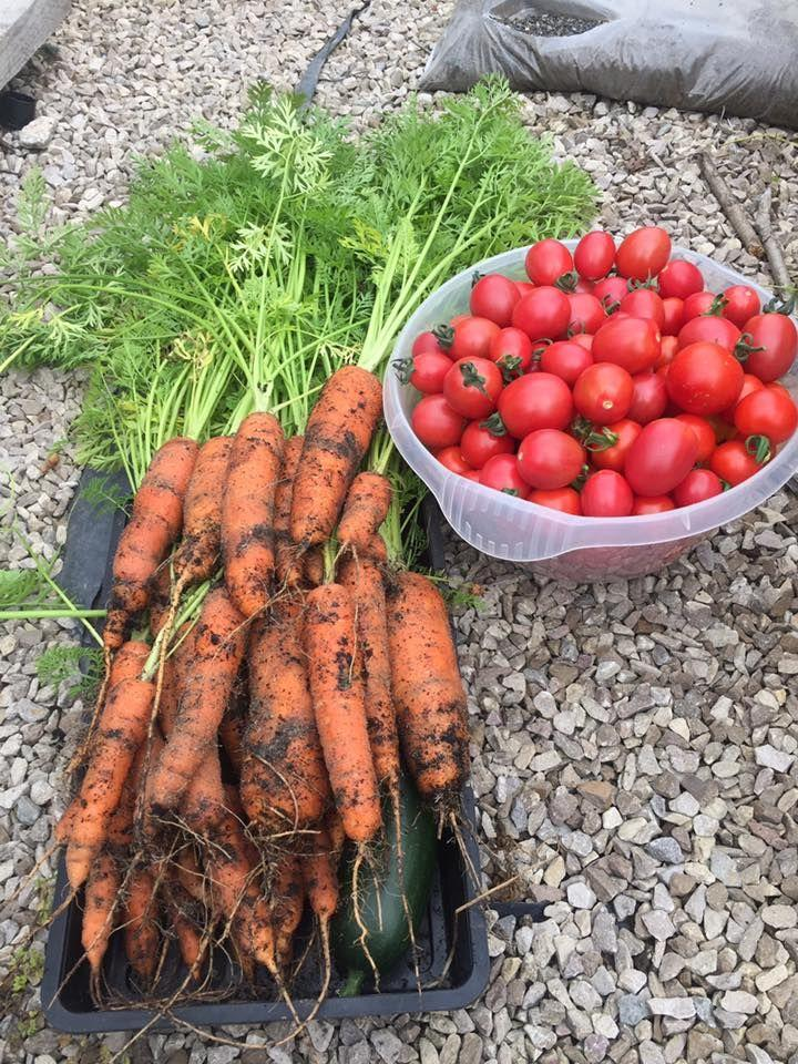 """<p>Chefs at <a href=""""https://baxterstorey.com/"""" target=""""_blank""""><strong>BaxterStorey</strong></a>, one of the UK's leading hospitality providers, have created their own allotments to supply their kitchens. Encouraged to grow their own fresh ingredients, the allotments are a valuable resource and creates a feeling of immense pride.<br></p><p>Chris Dickson, keen gardener and head chef at  the University of Cumbria, recently converted an overgrown patch into a herb garden at the University (pictured above).</p><p> 'We grow lots of different herbs, from chocolate mint and lemon balm to bronze fennel,' says Chris. 'I use the herb garden to train my young chefs on the different herb variations and how best to match them with dishes, which gives me that sense of joy and self-satisfaction. We always receive great feedback from customers about the freshness of the dishes too.'</p><p>Here, some of the green-fingered BaxterStorey team share their allotment stories...</p>"""