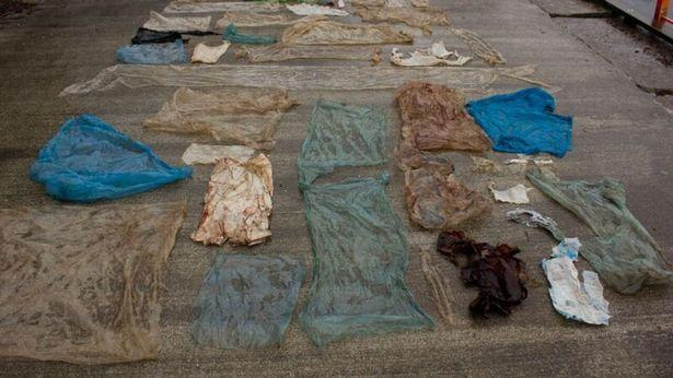 This Beached Whale's Stomach Was Filled with Plastic Bags