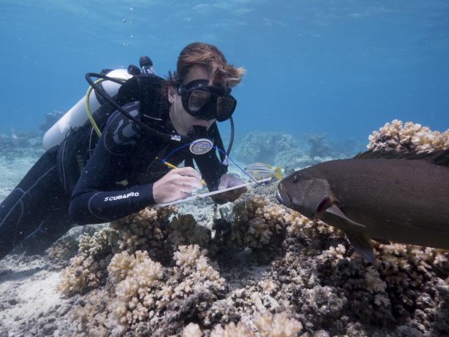 Scientist Alexander Vail studies the reefs around Lizard Island on Australia's Great Barrier Reef. While filming <em>Blue Planet II</em>, the team witnessed the worst bleaching event ever recorded on the Great Barrier Reef. (Photo: Yoland Bosiger/BBC)