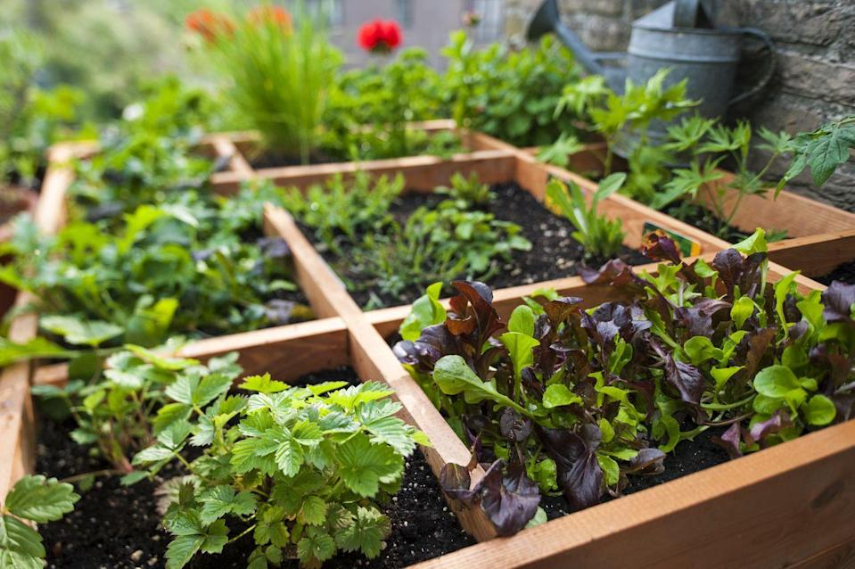 "<p>This highly efficient method divides raised beds into a grid. Vegetables then get planted in one or more squares at a density based on plant size (e.g., you'd plant about 16 radish seeds per square, but only one tomato plant).</p><p><strong>RELATED: </strong><a href=""https://www.goodhousekeeping.com/home/gardening/a20706747/square-foot-gardening/"" rel=""nofollow noopener"" target=""_blank"" data-ylk=""slk:The Pros and Cons of Square Foot Gardening"" class=""link rapid-noclick-resp"">The Pros and Cons of Square Foot Gardening</a></p>"