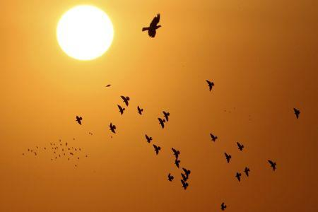 Doves, silhouetted against the rising sun, fly over the Jordanian capital of Amman