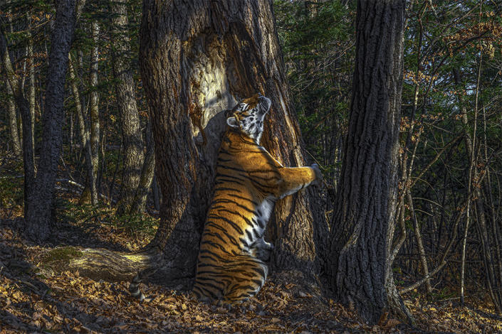 Rarest creatures on Earth captured in Wildlife Photographer of the Year awards