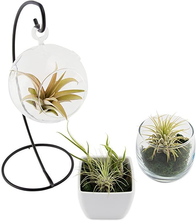 """<h2>CTS Air Plants Assorted Tillandsia Air Plants</h2><br><strong>The Hype:</strong> 4.3 out of 5 stars and 927 reviews<br><br><strong>Plant Parents Say:</strong> """"I am so happy with this purchase. This is my second time ordering from this seller, my first batch of air plants was over a year ago, one fell on the floor and got stepped on so of course, I needed to add a whole new set. This set was even better than the last!""""<br><br><em>Shop</em> <a href=""""https://amzn.to/38BK68o"""" rel=""""nofollow noopener"""" target=""""_blank"""" data-ylk=""""slk:CTS Air Plant Store"""" class=""""link rapid-noclick-resp""""><strong><em>CTS Air Plant Store</em></strong></a><br><br><strong>CTS Air Plants Store</strong> Tillandsia Airplants, $, available at <a href=""""https://amzn.to/3aNPwQl"""" rel=""""nofollow noopener"""" target=""""_blank"""" data-ylk=""""slk:Amazon"""" class=""""link rapid-noclick-resp"""">Amazon</a>"""