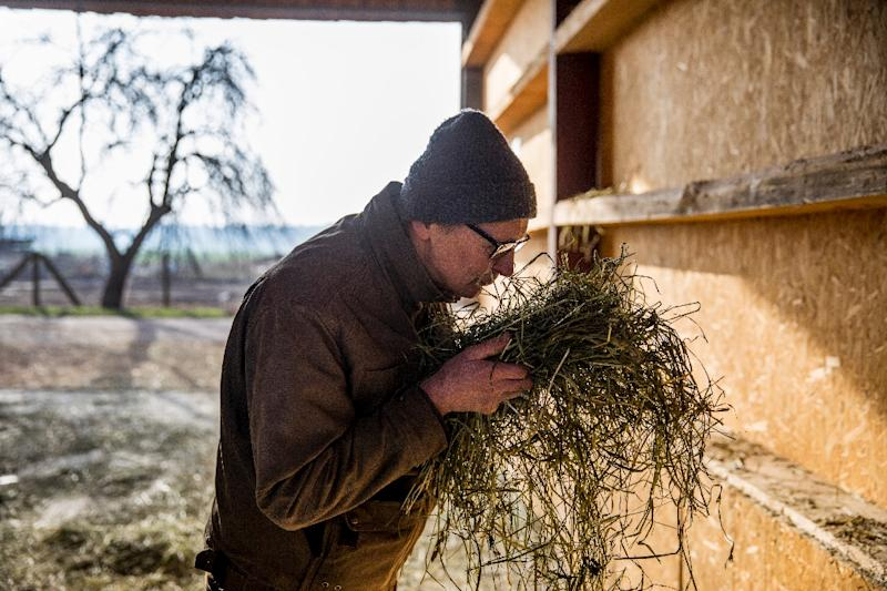Farmer Heiner Luetke Schwienhorst says the changing climate has already hit his crop production (AFP Photo/Odd ANDERSEN)