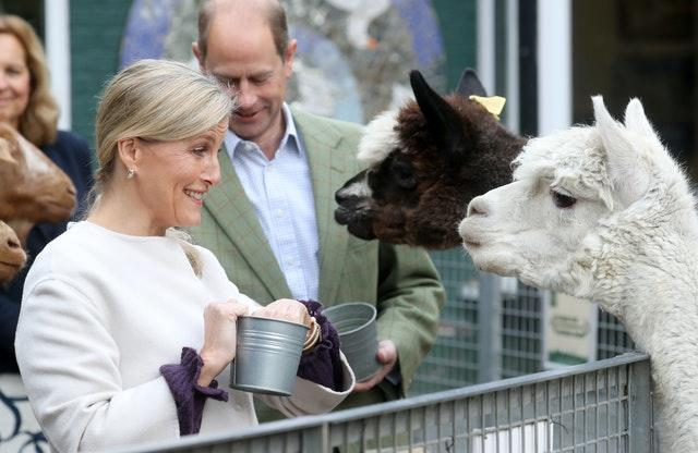 The Earl and Countess of Wessex feed Alpacas during their visit to Vauxhall City Farm. Chris Jackson/PA Wire