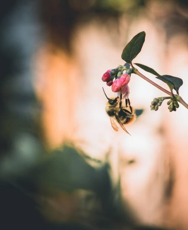 Amit Sharma says he chose this photo to submit to the competition because 'bees are vital for the preservation of ecological balance and biodiversity in nature.'