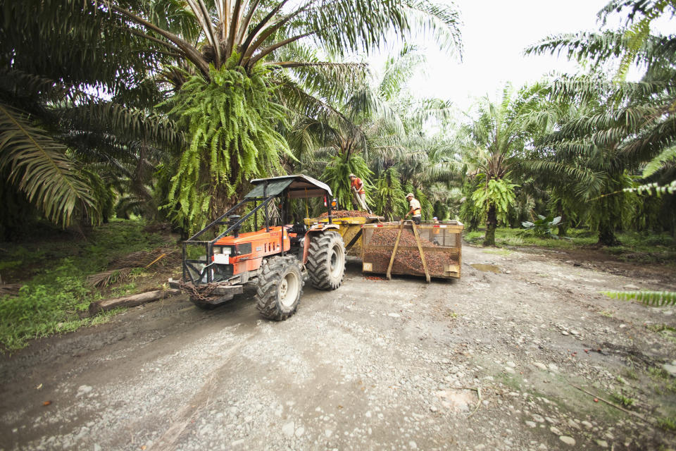 Palm oil is damaging our tropical rainforests [Photo: Getty]