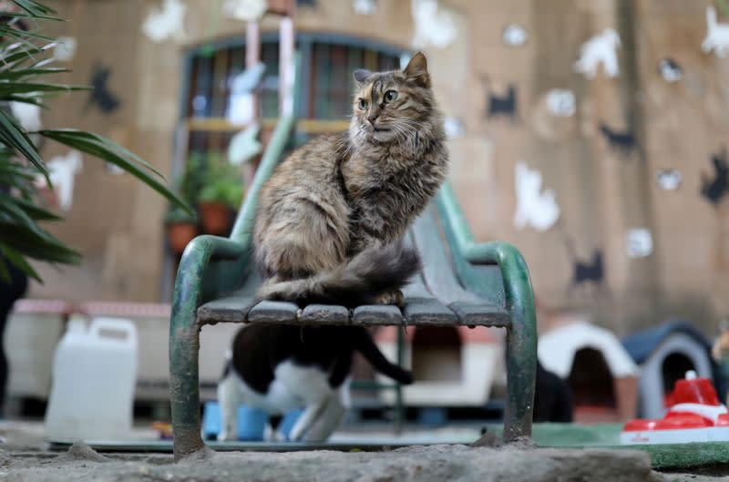 Barcelona cat sanctuary holds interviews via Instagram with people who want to adopt cats