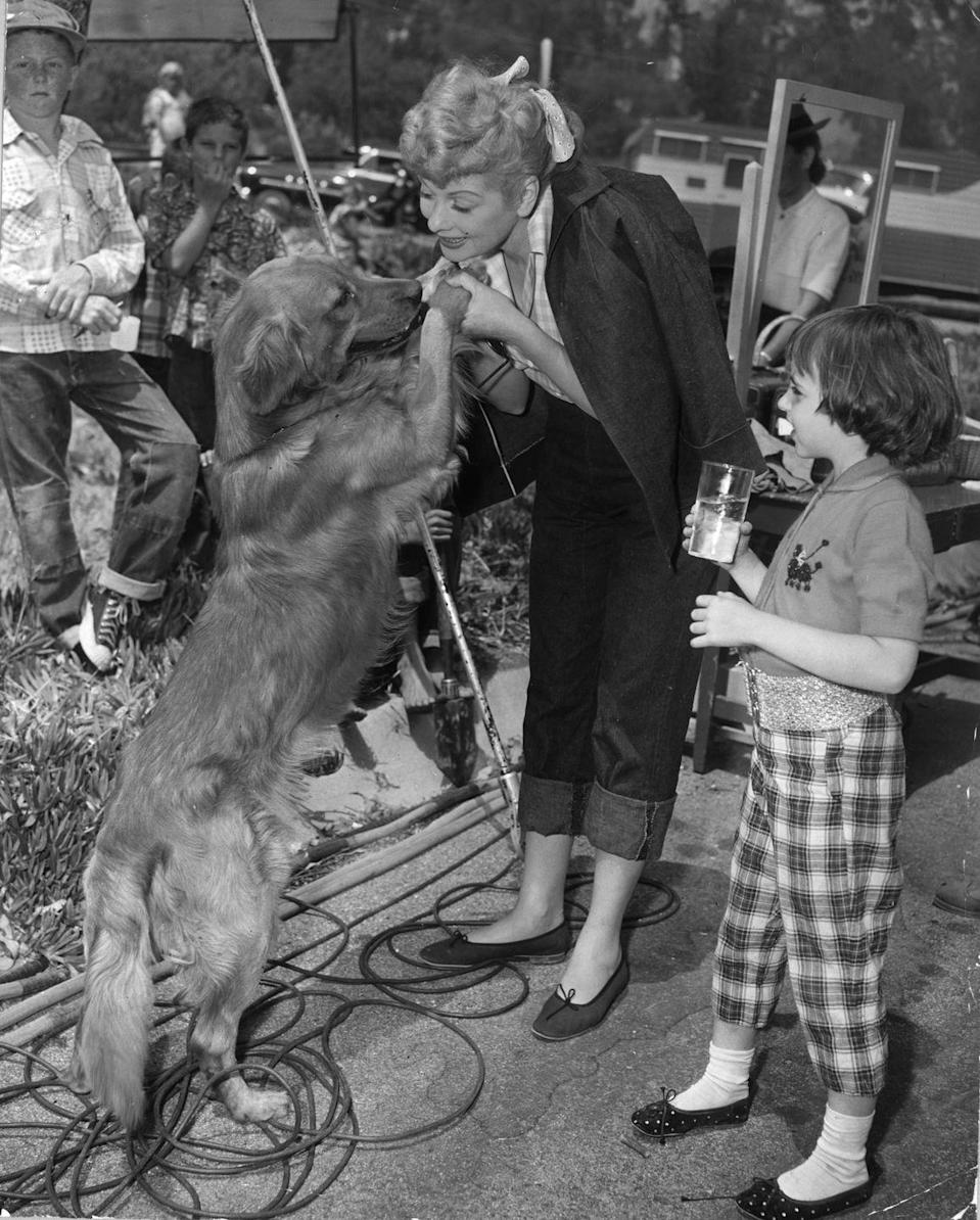 <p>The actress is distracted on the set of director Vincente Minnelli's film by a golden retriever. Lucille was joined on set by her husband, as they appeared in the film together. </p>