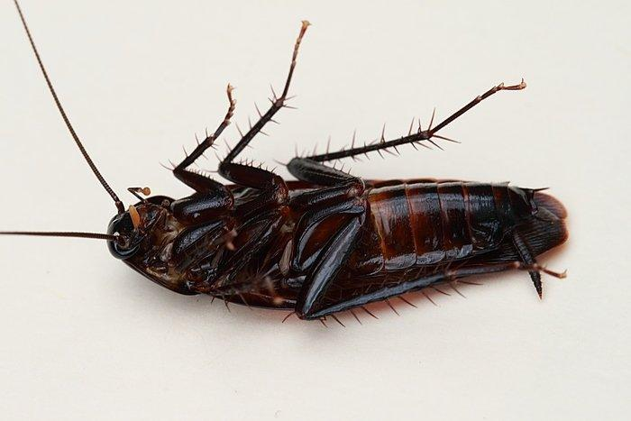 staff forced to drink urine and eat roaches