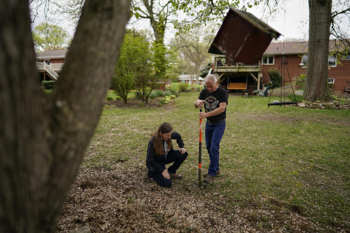 University of Maryland entomologists Michael Raupp and Paula Shrewsbury turn a shovel of dirt to pick out cicada nymphs in a suburban backyard in Columbia, Md., Tuesday, April 13, 2021. The cicadas will mostly come out at dusk to try to avoid everything that wants to eat them, squiggling out of holes in the ground. They'll try to climb up trees or anything vertical. (AP Photo/Carolyn Kaster)