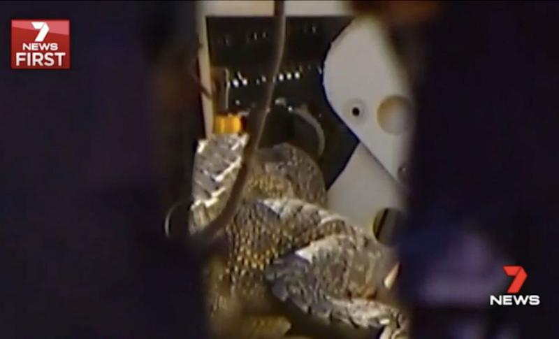 An agitated croc was captured on Wednesday evening but it's not believed to have attacked Anne Cameron. Source: 7 News