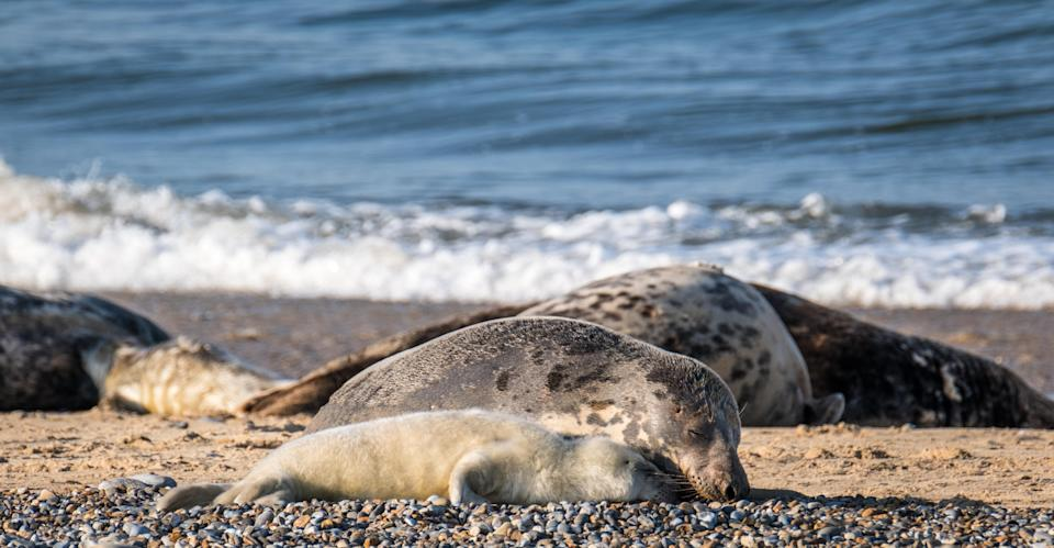 Mother and pup bonding at Blakeney Point in Norfolk (National Trust/Hanne Siebers/PA)