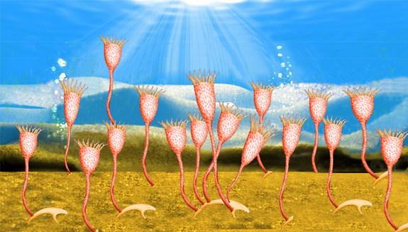 An artist's conception of a Cotyledion community in the Cambrian.