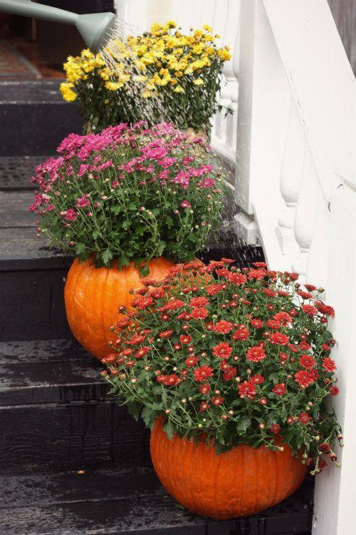"""<p>Don't turn your hallowed-out pumpkins into jack-o'-lanterns just yet! Instead, plant fall mums inside for the perfect planters to lead guests up your steps. </p><p><strong>Get the tutorial at <a href=""""http://www.17apart.com/2012/10/how-to-fall-pumpkin-planters.html"""" rel=""""nofollow noopener"""" target=""""_blank"""" data-ylk=""""slk:17Apart"""" class=""""link rapid-noclick-resp"""">17Apart</a>.</strong><br></p>"""