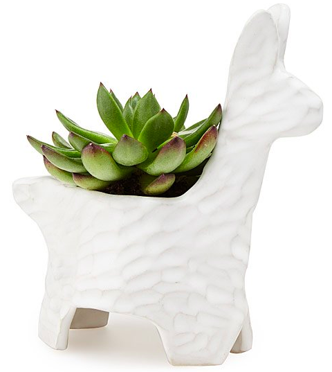 Llama planter, S$66.36. PHOTO: Uncommon Goods