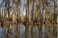 """<p><a href=""""https://www.nps.gov/jela/planyourvisit/index.htm"""" rel=""""nofollow noopener"""" target=""""_blank"""" data-ylk=""""slk:Jean Lafitte National Historical Park and Preserve"""" class=""""link rapid-noclick-resp""""><strong>Jean Lafitte National Historical Park and Preserve </strong></a></p><p>Made up of six different locations across Southern Louisiana, you can see nature at the Barataria Preserve or the Wetlands Acadian Cultural Center, learn about history at the Chalmette Battlefield or learn more about the Acadian (Cajun) settlers at the Acadian Cultural Center. </p>"""