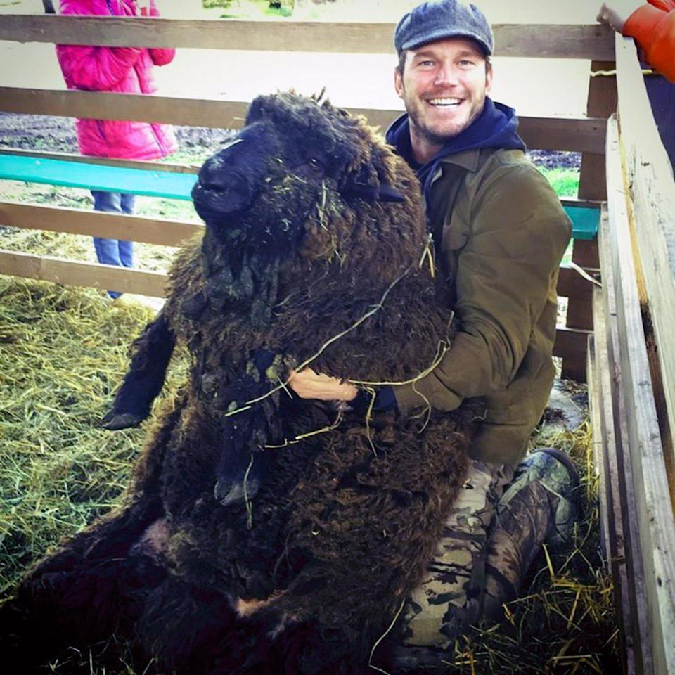 """When he isn't starring in <em>Jurassic World </em>or <em>Guardians of the Galaxy</em>, <a href=""""https://people.com/pets/chris-pratt-shows-first-baby-lamb-farm-valentines-day/"""">Pratt is raising sheep</a> on a farm in Washington state. He even <a href=""""https://youtu.be/LzXwximuwrM"""">has prize-winning wool to back it up</a>! He calls the ranch his """"special slice of heaven."""""""