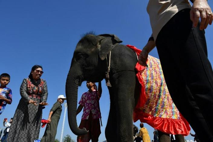 Elephants were phased out of the logging industry about 30 years ago, leaving their mahouts unemployed, so they turned to Thailand's flourishing tourism industry, a burgeoning sector of amusement parks offering elephant rides and performances (AFP Photo/Lillian SUWANRUMPHA)