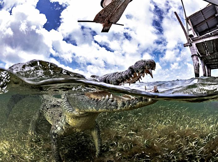 """<p>""""One picture shows me with a crocodile who decided to swim towards me unexpectedly, so I had to drop on my back since there was little time to move out the way and allow the croc to swim over me."""" (Photo: Alex Suh/Caters News) </p>"""