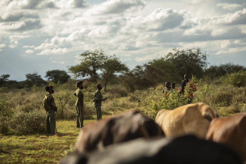 Three Team Lioness members speak to three cattle farmers in the distance. The backs of cattle can be seen in the foreground.