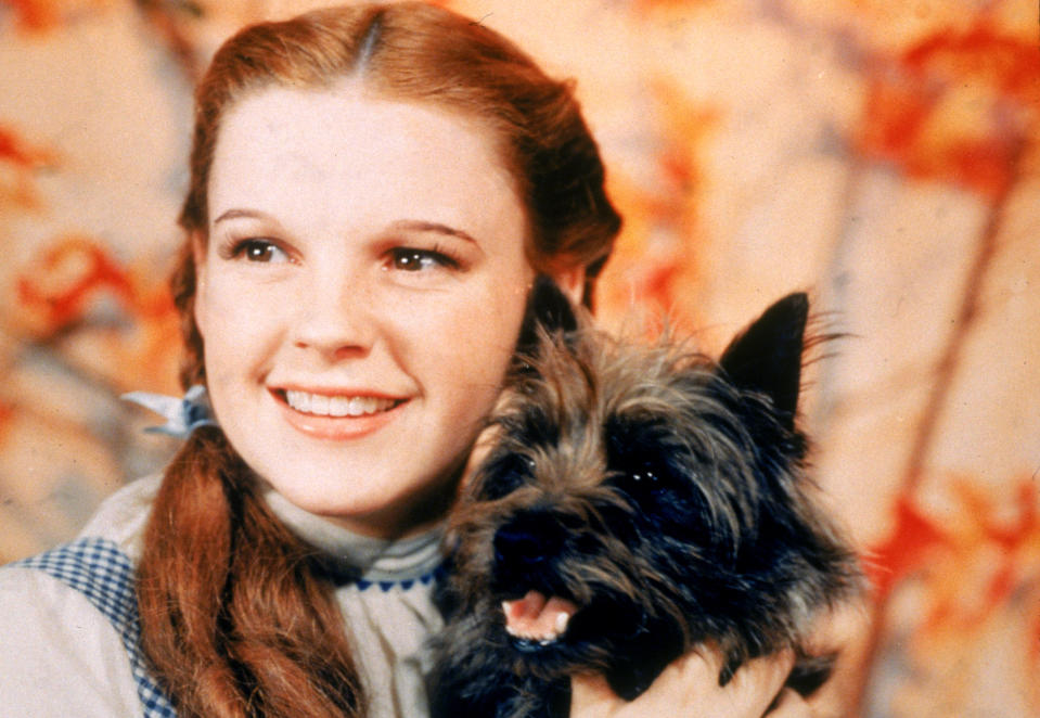 Judy Garland holding Toto the dog for the film 'The Wizard Of Oz'. (Photo by MGM Studios/MGM Studios/Getty Images)