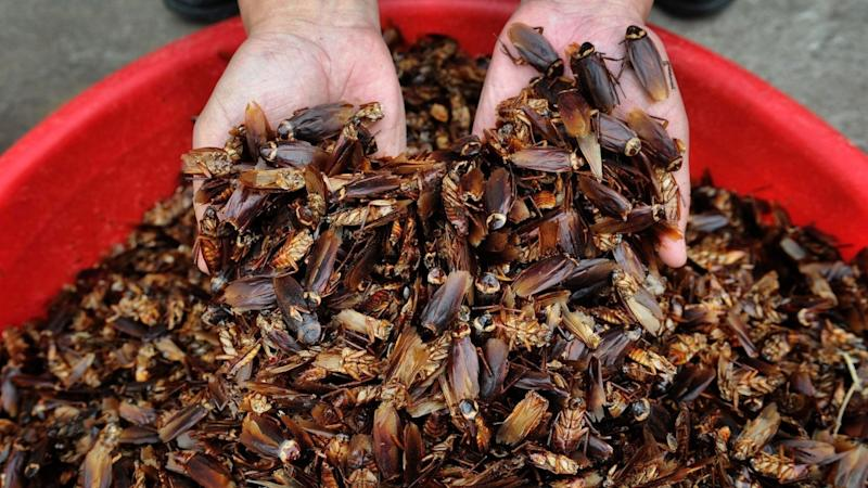 A giant indoor farm in China is breeding 6 billion cockroaches a year. Here's why