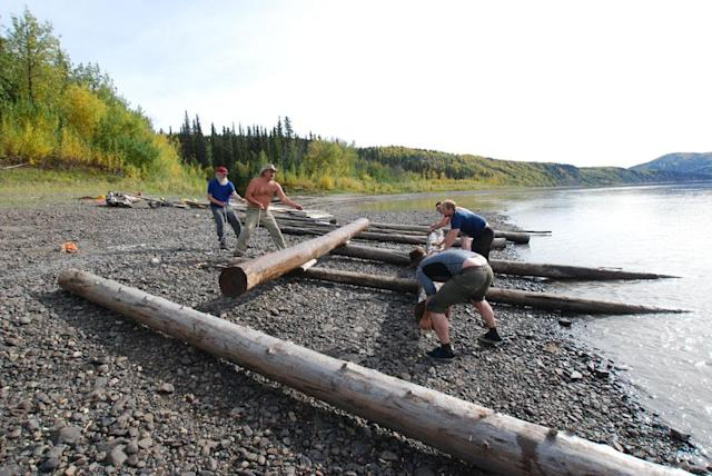 Yukon River, Alaska, USA: Willi Prittie, Marty Raney, Brent Sass, Tyler Johnson and Matt Raney arranging logs for a raft.