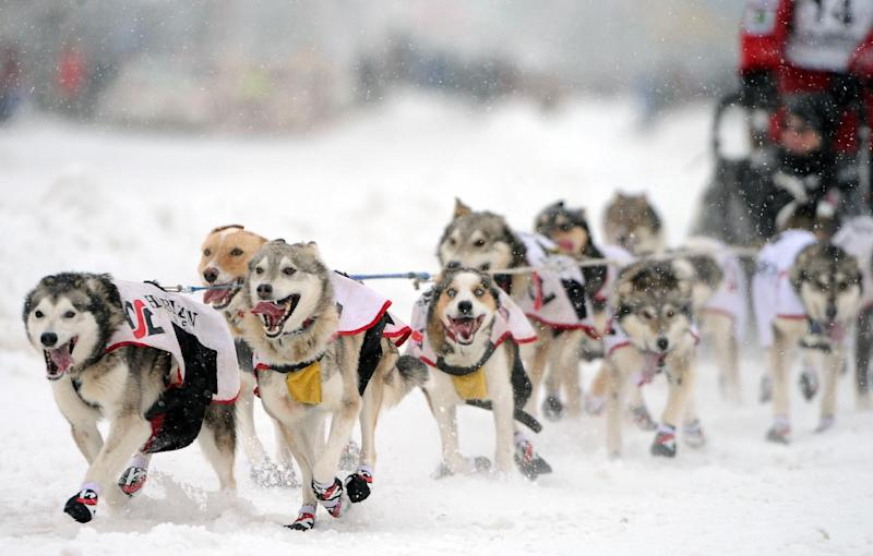 Aliy Zirkle, of Two Rivers, Ak.,  drives her dogs during the ceremonial start of the Iditarod Trail Sled Dog Race, Saturday, March 3, 2012 in Archorage, Alaska. (AP Photo/Anchorage Daily News, Bob Hallinen)
