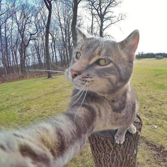 "<p>The truly funny thing about this gray tabby's selfies? The angle, the expressions, the concentration are all so familiar from the thousands of selfies we've all seen that Manny looks almost <i>human. <i>(Photo: <a href=""https://www.instagram.com/yoremahm/"" rel=""nofollow noopener"" target=""_blank"" data-ylk=""slk:Instagram.com/Yoremahm"" class=""link rapid-noclick-resp"">Instagram.com/Yoremahm</a>)</i></i><br></p>"