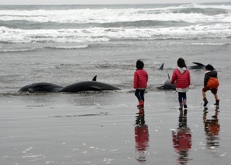 Children look at melon-headed whales beached on the shore of Hokota city, northeast of Tokyo on April 10, 2015 (AFP Photo/Toshifumi Kitamura)
