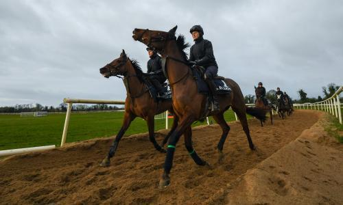 Tiger Roll would struggle in Gold Cup despite lofty rating, says Elliott